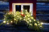 christmas lights on tree branch